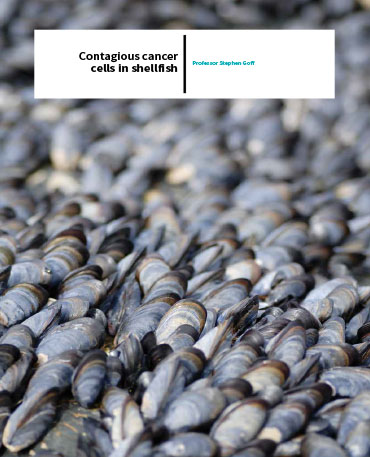 Professor Stephen Goff – Contagious Cancer Cells In Shellfish